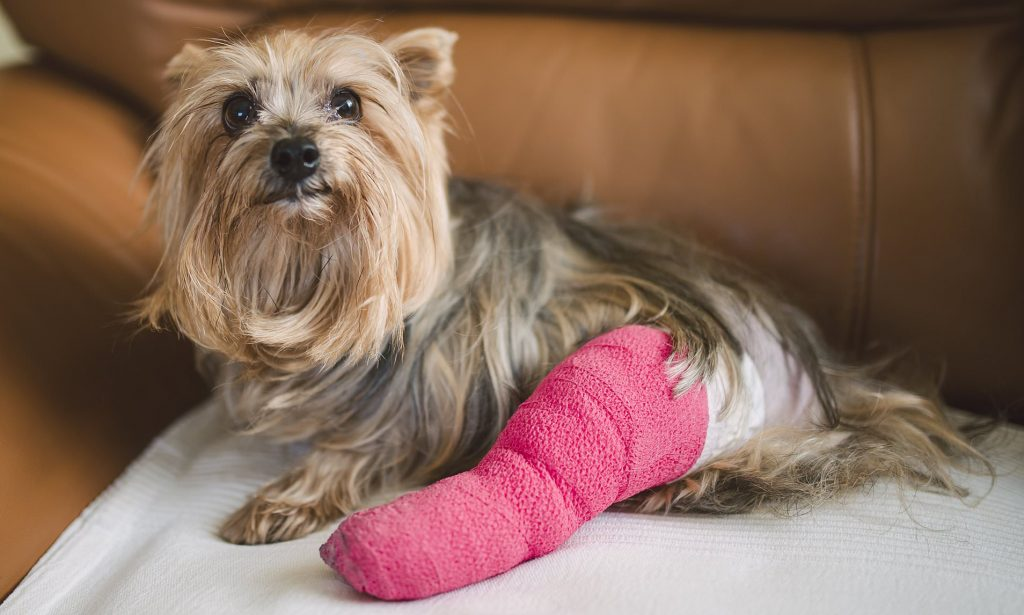 paquetes de seguros de animales